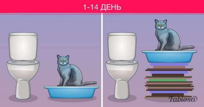 Как приучить кошку к унитазу: пошаговая инструкция