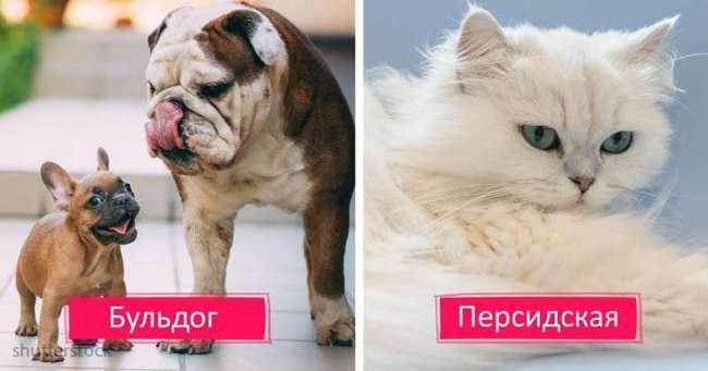 Самые болезненные породы кошек и собак