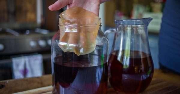 Как применять чайный гриб в кулинарии