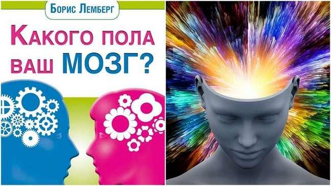 Как определить пол мозга