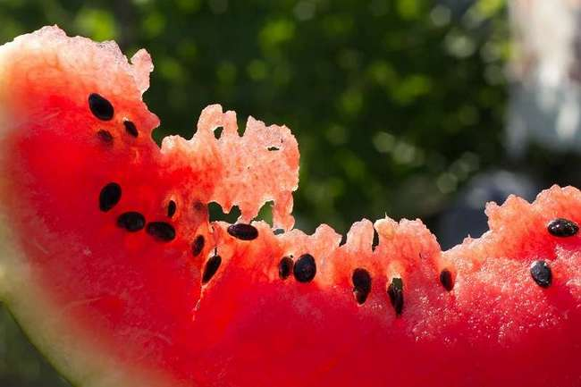 Польза семян арбуза для здоровья