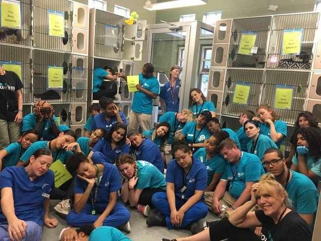 20+фото ссамой крупной акции для бездомных животных, где даже гуси нашли себе хозяев
