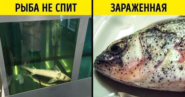 Как вмагазине распознать рыбу, которую опасно есть