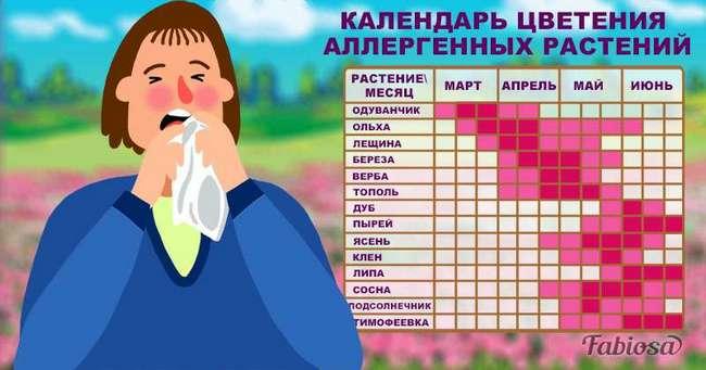 Календарь аллергика: на что бывает аллергия в разные времена года и как избежать проблем