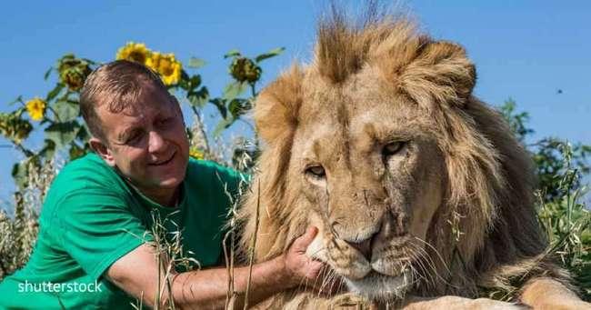 Мужчина держал львов в качестве домашних животных, но это обернулось для него трагедией