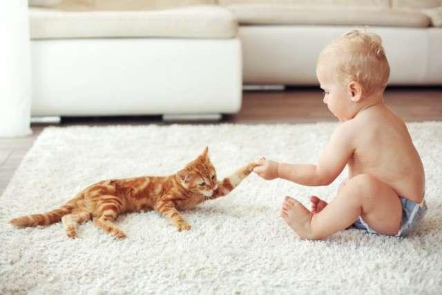 Малыш и кошка: воспитание любовью.