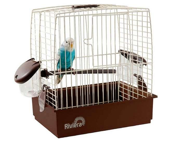 Как обустроить клетку для волнистого попугая: размер, где поставить, кормушки и поилки, фото