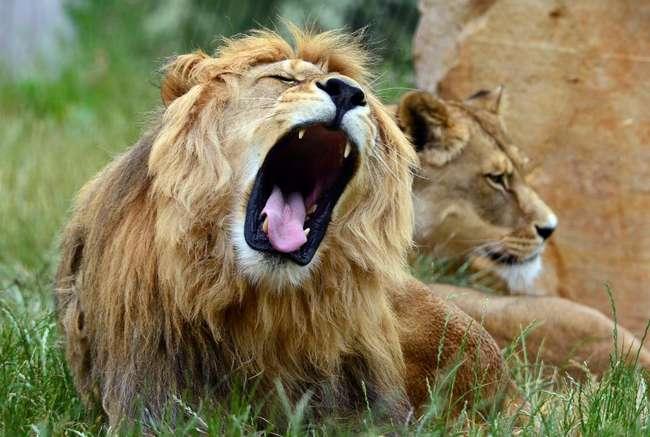 Как привлечь мужчину-Льва: методы и советы