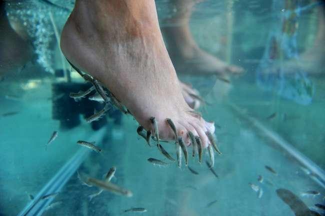 -Рыбный педикюр-, запрещенный в некоторых странах: в чем таится опасность
