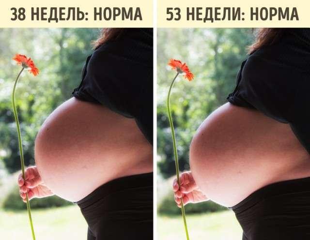 Факты о беременности