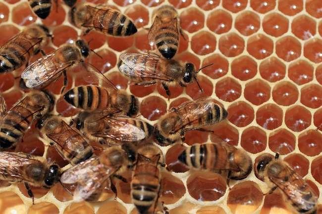 Мифы и реальность: что на самом деле представляет из себя магазинный мед