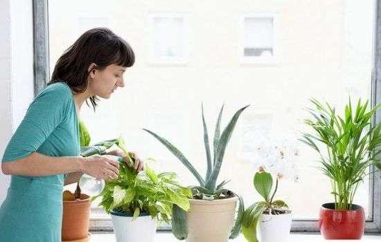 Простые комнатные растения защищают от простуды и гриппа