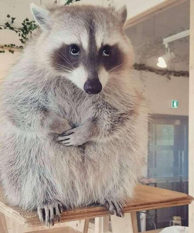 23фото животных, которые исцелят отхандры нехуже любимого фильма икакао