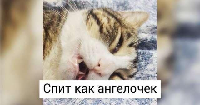Пользователи твиттера рассказывают остранностях своих котов