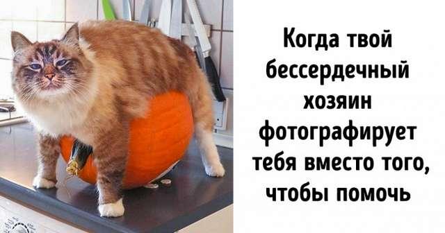 18фото котиков, которых человеческие папарацци застали всамый неподходящий момент
