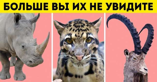 Человечество уничтожило 60% животных с1970года. Ученые рассказали, что нас ждет дальше