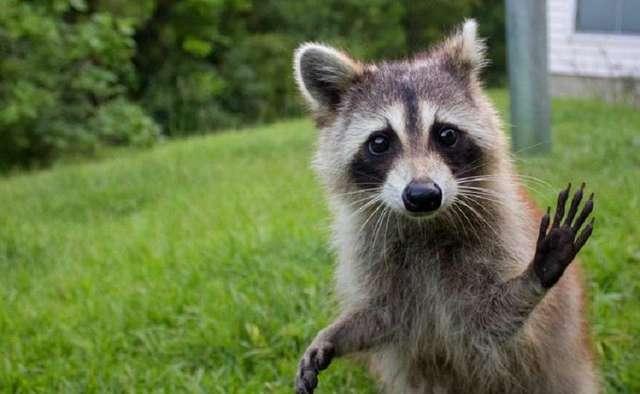 Важные вещи, которые нужно знать тем, кто решил завести необычное животное в квартире