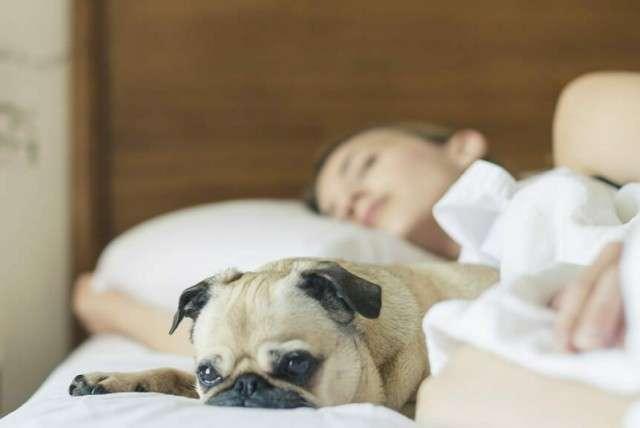 Можно ли пускать домашнего питомца к себе в кровать?