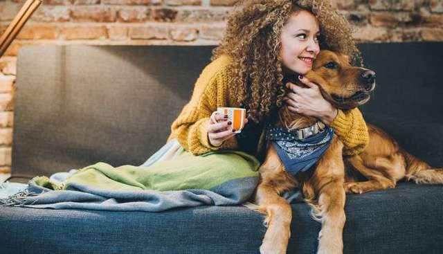 Как наладить отношения между вашим питомцем и новым возлюбленным: знакомство и общение