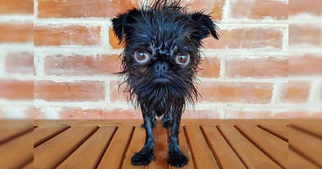 Встречайте Кальмара — собачку, у которой в инстаграме больше подписчиков, чем у некоторых звезд Голливуда