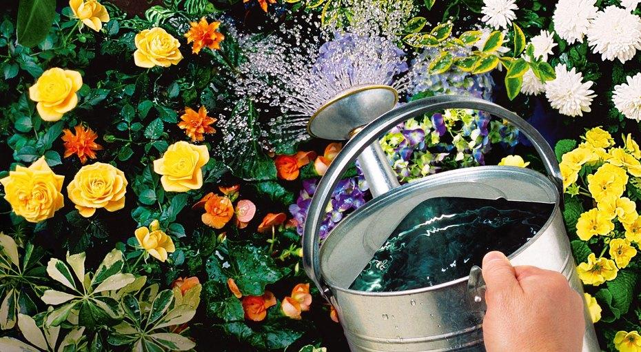 Три сезона красоты. Календарь важных дел в саду с мая по октябрь