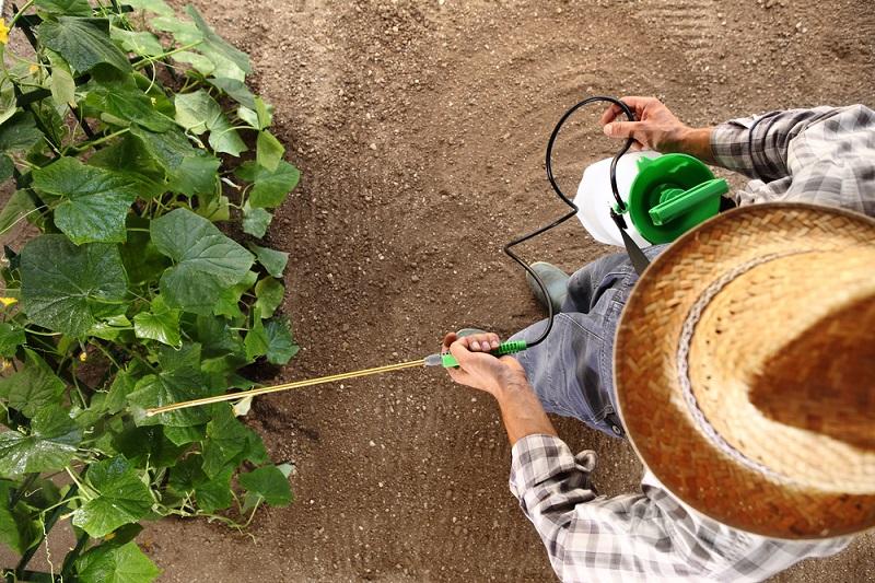 Тонкости выращивания огурцов