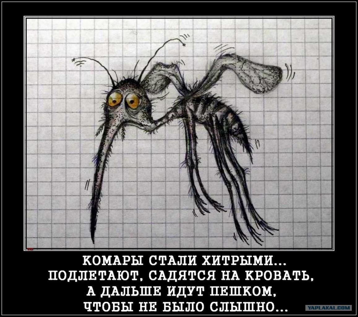 Комары картинки смешные, года
