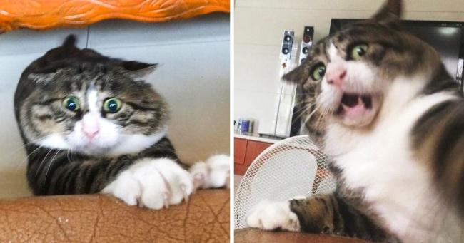 17 фото котика с человеческими эмоциями (Сохраните себе на случай плохого настроения)