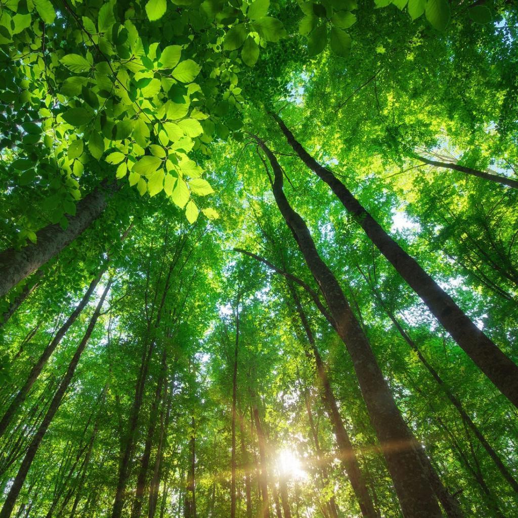 Есть ли у растений сознание? Ученые дали уверенный ответ: растения не думают, они просто растут