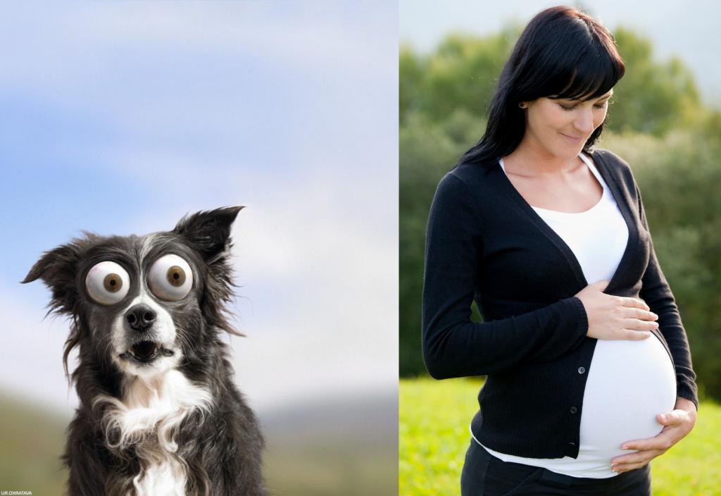 Странная просьба беременной знакомой удивила владелицу собаки: ее попросили сменить кличку питомца