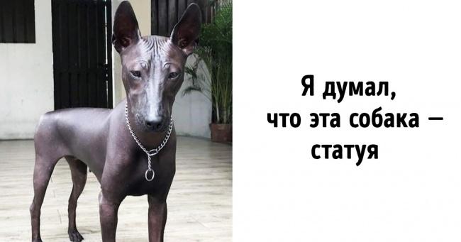 20 чудо-собак, которые выглядят так, словно они не с нашей планеты