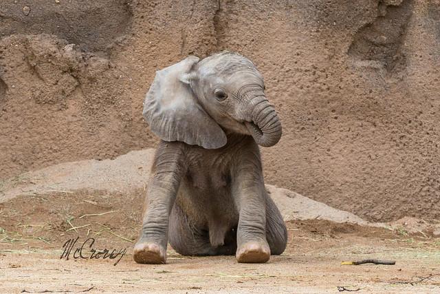 10+ фактов о животных, которые впечатлили бы даже вашего учителя биологии