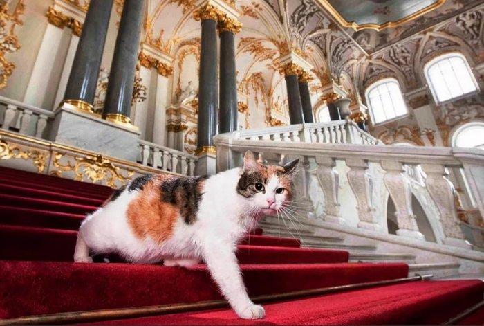50 котов не просто так живут в Эрмитаже. У них важная миссия