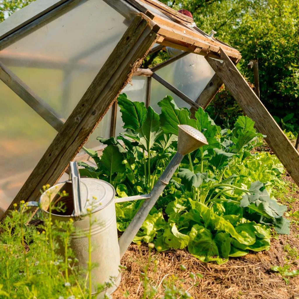 Благодаря советам свекрови мой огород готов к осени: что нужно непременно сделать в августе, чтобы собрать большой урожай