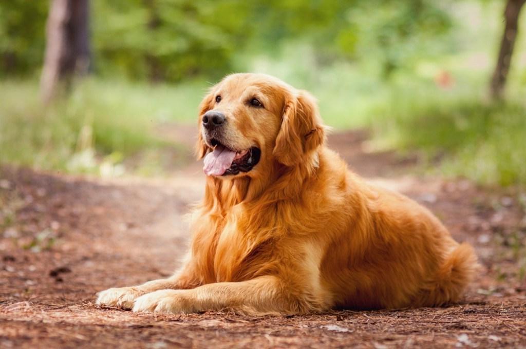 Кинологи рассказывают: какая порода собак подойдет вам по психотипу