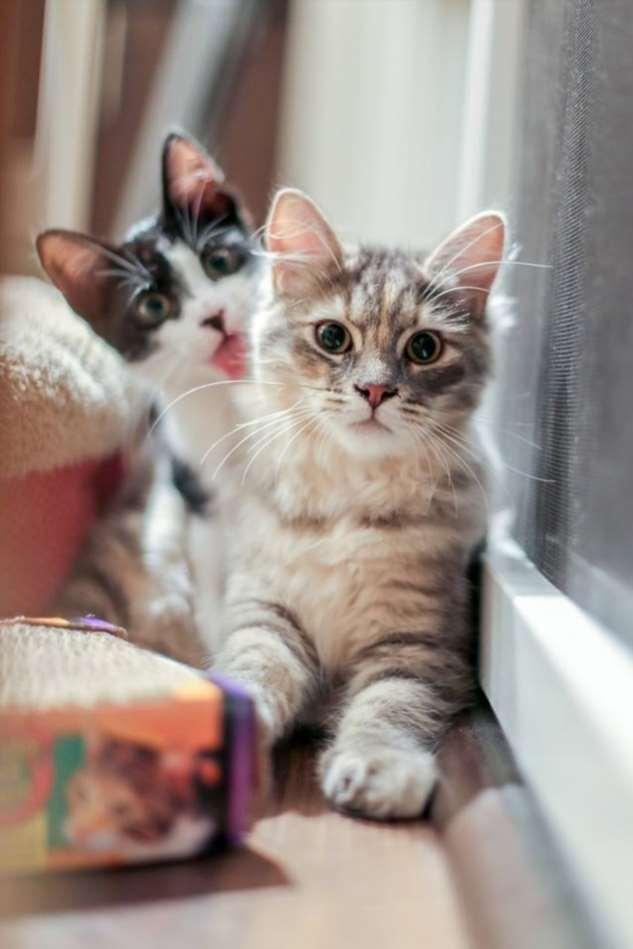 Прикольные котики. Кити кити юмор. Подборка №milayaya-55570818102019
