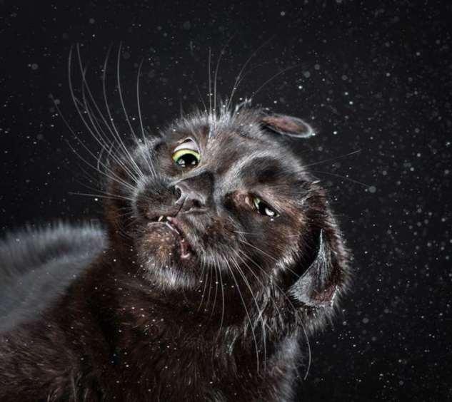 Прикольные котики. Кити кити юмор. Подборка milayaya-milayaya-12120621112019-3 картинка milayaya-12120621112019-3