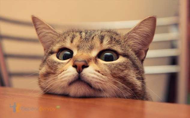 Прикольные котики. Кити кити юмор. Подборка milayaya-milayaya-24100624122019-0 картинка milayaya-24100624122019-0
