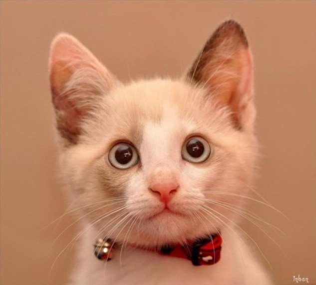 Прикольные котики. Кити кити юмор. Подборка milayaya-milayaya-24100624122019-1 картинка milayaya-24100624122019-1