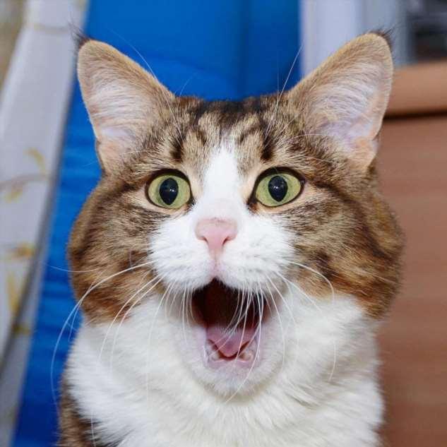 Прикольные котики. Кити кити юмор. Подборка milayaya-milayaya-24100624122019-12 картинка milayaya-24100624122019-12