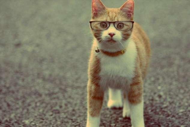 Прикольные котики. Кити кити юмор. Подборка milayaya-milayaya-24100624122019-13 картинка milayaya-24100624122019-13