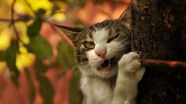 Прикольные котики. Кити кити юмор. Подборка milayaya-milayaya-24100624122019-14 картинка milayaya-24100624122019-14