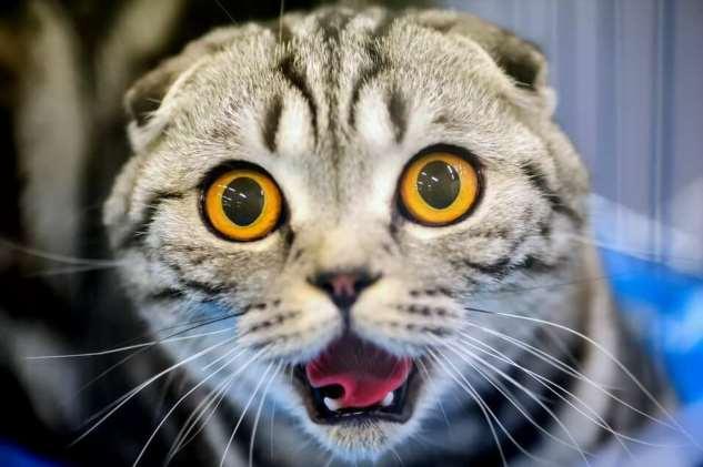 Прикольные котики. Кити кити юмор. Подборка milayaya-milayaya-24100624122019-15 картинка milayaya-24100624122019-15