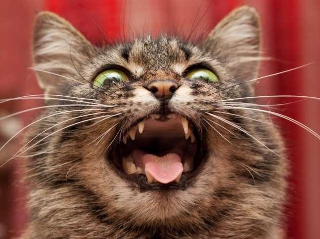 Прикольные котики. Кити кити юмор. Подборка milayaya-milayaya-24100624122019-3 картинка milayaya-24100624122019-3