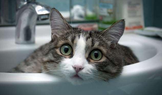 Прикольные котики. Кити кити юмор. Подборка milayaya-milayaya-24100624122019-7 картинка milayaya-24100624122019-7