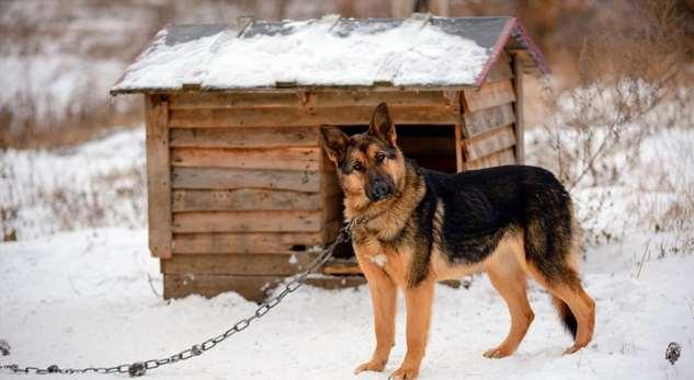 В Башкирии изсобачьей будки украдено более миллиона рублей