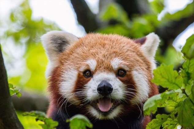 12 видов животных, которые прямо на наших глазах могут исчезнуть с лица земли