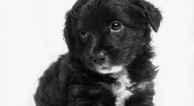 Приютский щенок научился улыбаться — иэто помогло ему найти новый дом