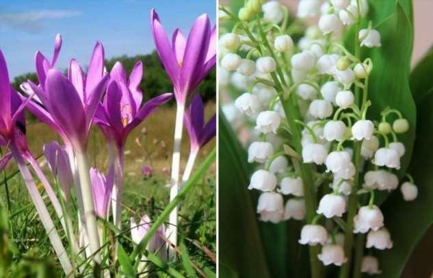 10 красивых растений, которые нельзя сажать у себя в саду ни в коем случае
