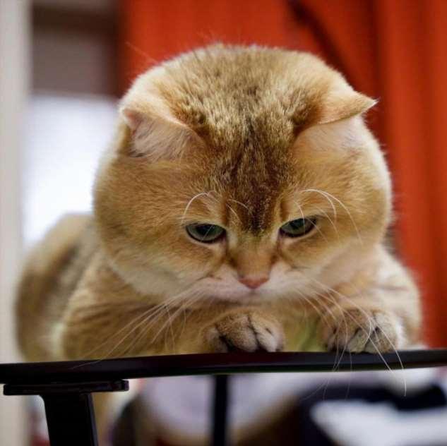 Прикольные котики. Кити кити юмор. Подборка №milayaya-01280507042020